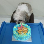 Dogs birthday cakes - happyboy 1st birthday part2