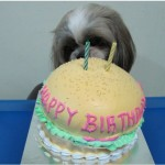 Dogs birthday cakes - happyboy 2nd birthday