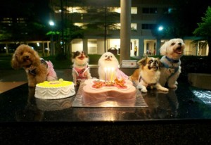 Dogs birthday cakes - miko birthday