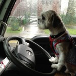 Pet Taxi Singapore 24 hour Emergency happyboy serious driver