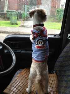 Pet Taxi Singapore 24 hour Emergency happyboy curious