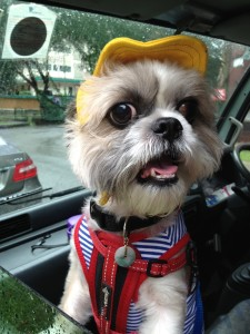 Pet Taxi Singapore 24 hour Emergency happyboy window look