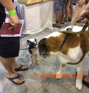 Pet Expo 2015 SG small and big dog