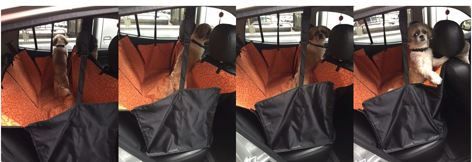 UberPETS cageless Private car top photo