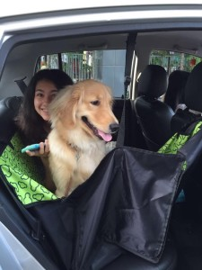 uber for pets sg 4