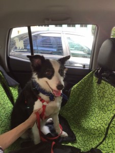 uber for pets sg 5a