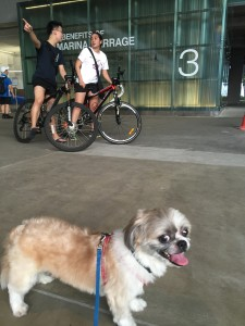 marina barrage benefits and dog friendly park