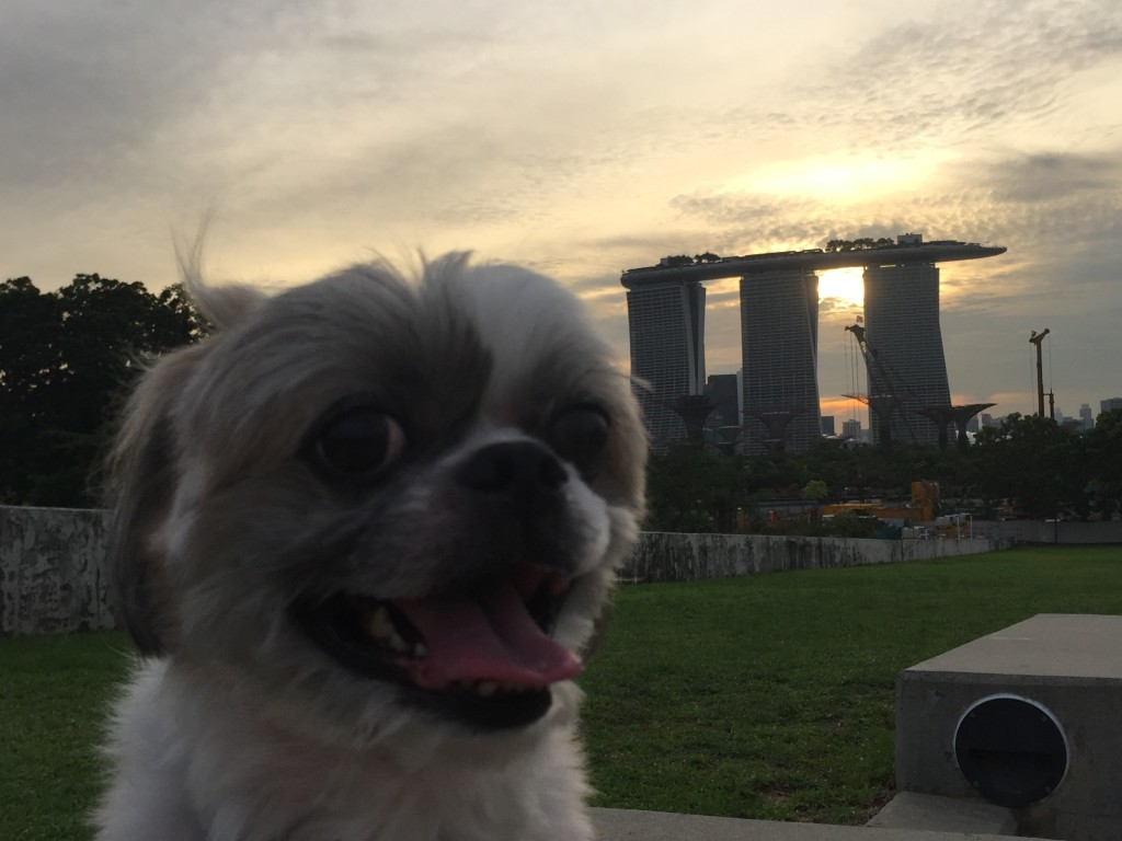 marina barrage sunset view dog friendly park