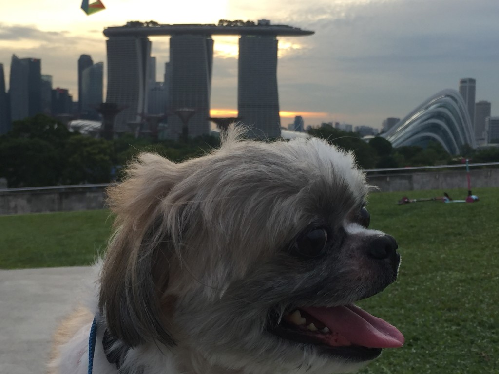 marina barrage sunset view dog friendly park8