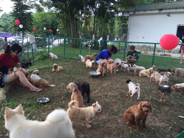 Adopt homeless dog in Singapore, fostering street dog in